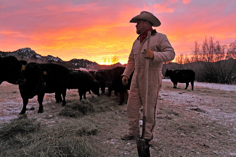 Walt Hester | Trail Gazette<br /> Brett Rasmussenfeeds the livestock of MacGregor Ranch at about 3 below zero on Thursday, almost 30 degrees warmer than the previous morning. Rasmessen says the ranch has not lost any animals from the last several days of extreme cold.