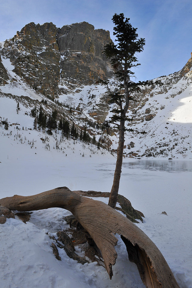 A harty new tree grows out from under the remains of an old fallen tree at Emerald Lake on Monday. While the alpine everinment is harsh this time of year, life continues.