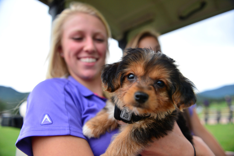 Ali Smith holds a friend's yorkipoo at the public 18-hole course on Wednesday. The poodle-Yorkshire terrier mix entertained and distracted glofers and the team amnagers for much of the afternoon.