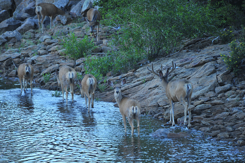 A doe checks behind as a small herd of deer walk the edge of Mary's Lake on Wednesday.