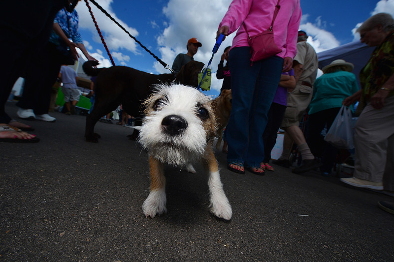A curious puppy investigates the photographer at the farmers' market.