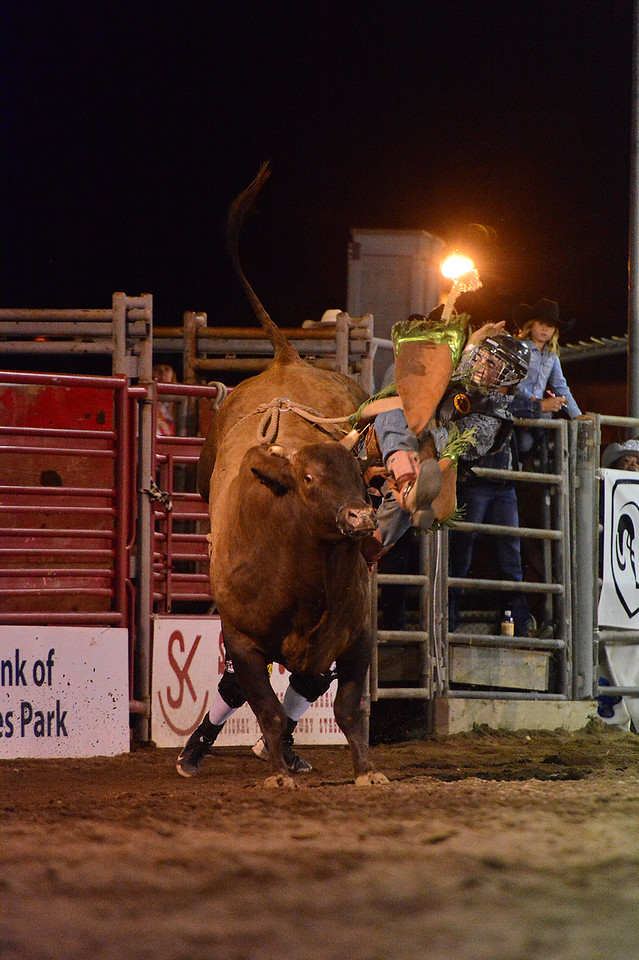 "Local cowboy Ryan Franklin comes off his bull during Thursday's Rooftop Rodeo. ""My dad is full-throttle,"" said the Estes Park High School grad. ""I don't know if my mom or my girlfriend is worse about worrying."""