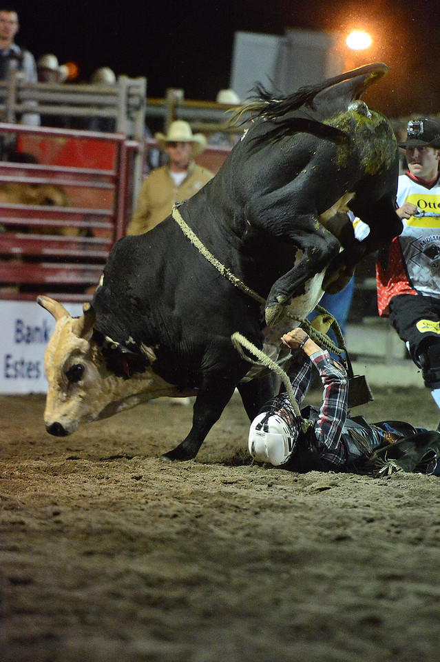 A cowboy hits the ground hard on Thursday and looked doomed, but was not stomped. Bull riders are in the most danger when on the ground, which is why bullriders are required to wear kevlar vests and many now where helmets.