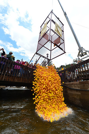 Ducks splash down into the Fall River at Nicky's Resort on Saturday. This was the 25th Estes Park Duck Race.