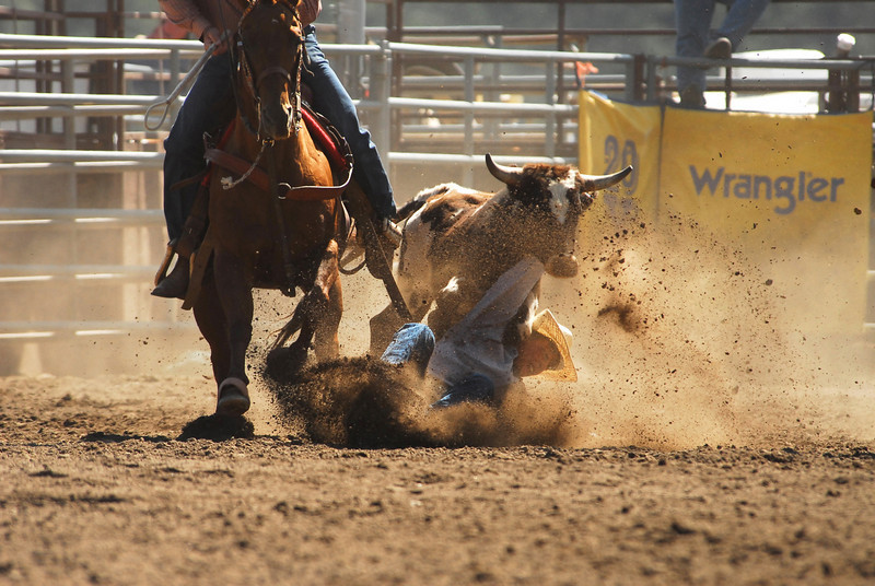Photo by Walt Hester<br /> Ross Wahlert of Grover, Co., finds himself on the wrong side of his steer.