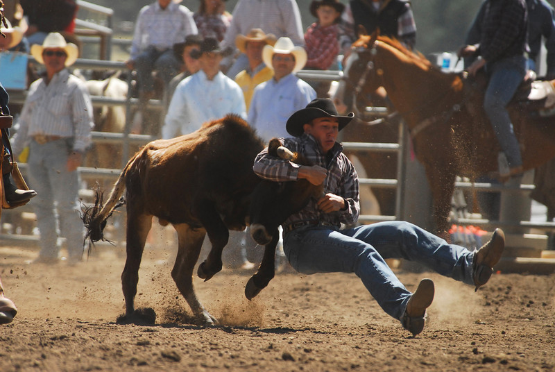 Photo by Walt Hester<br /> Chisum Docheff of Longmont, prepares for landing during Sunday's Boys 14-18 Steer Wrestling at the Colorado Junior Rodeo Association Finals at the Granny May Arena. The event featured the best you rodeo athletes from throughout Colorado.