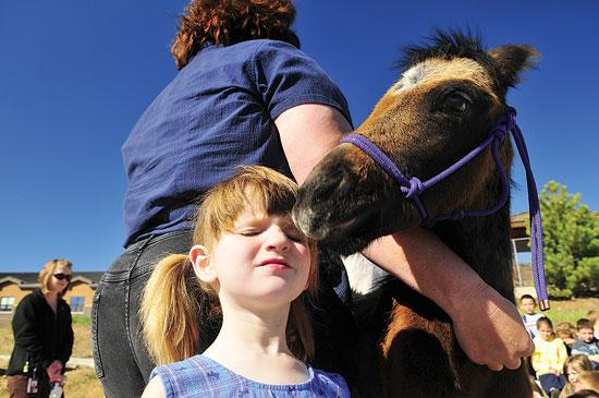 Chippy kisses Chippewa, a 14-week old quarter horse, nuzzles Lexi Richardson at the Estes Park Elementary School on Thursday. The orphaned horse was at the school for a little hands-on horse education for the children. Photo by Walt Hester