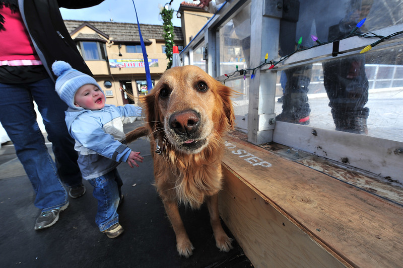 Calvin Mant, 2, of Lakewood, Colo., attempts to hug a golden retyreiver, Emmie, who seems either unaware or unwilling, at the ice rink on Saturday. The rink has already been a big draw for both visitors and local skaters.