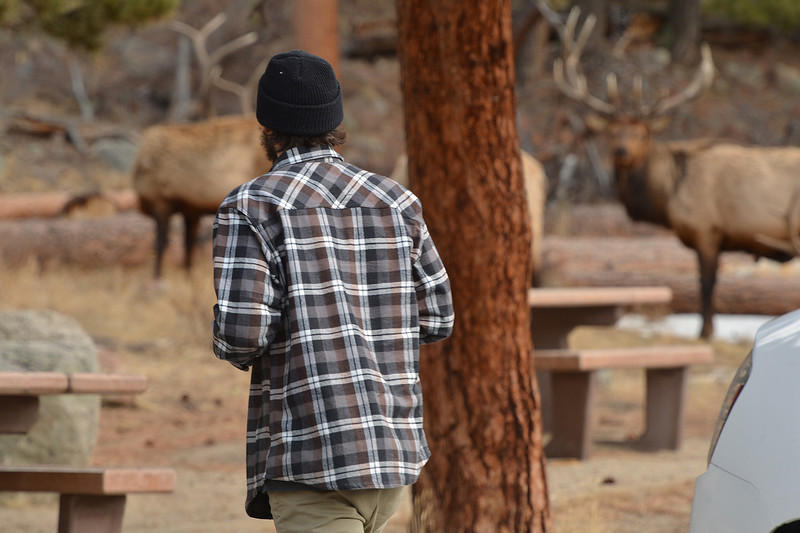 A park visitor tries to line up a shot of bull elk near the Lawn Lake Trail Head on Wednesday. The bulls congragate away from the cows and calves this time of year.