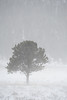 Walt Hester | Trail Gazette<br /> High winds blast snow across Moraine Park and obscuring the view on Wednesday. More snow is expected over the weekend.