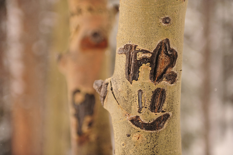 Walt Hester | Trail Gazette<br /> Letters and a face adorn an aspen tree in Rocky Mountain National Park on Wednesday. It is illegal to carve on trees in the park.
