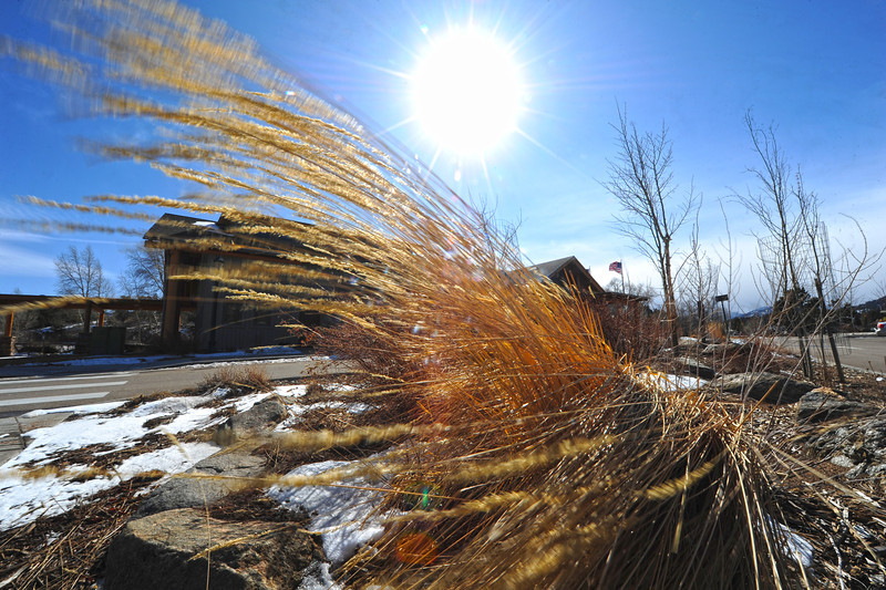 Walt Hester | Trail Gazette<br /> Tall decorative grass is bent in the wind that blasted Estes Park on Wednesday. WHile the wind should die down, snow my take its place.