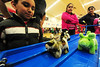 Walt Hester | Trail Gazette<br /> Darel Guadarrama, 8, left, watches the toy pigs snort and wiggle their way down the track on Sunday.