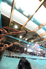 Walt Hester   Trail Gazette<br /> Senior swimmer TJ Hall takes off during a relay in March. Hall and the 200 yard medley relay team will compete in the boys 4A meet on the strenth of their performance last week.