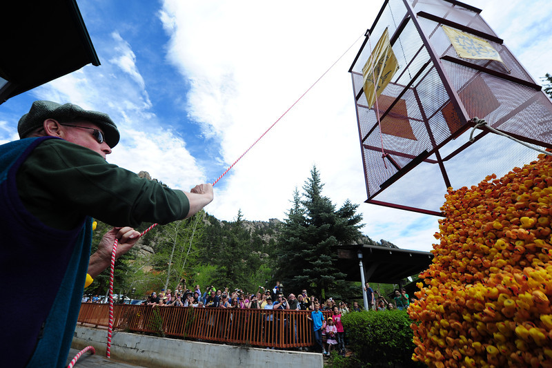 Walt Hester | Trail Gazette<br /> Robert Burkhardt yanks the cord to start the 23rd annual Estes Park Duck Race on Saturday. Burkhardt was given the honor as he will soon retire from running the Eagle Rock School, which has raised $100,000 for its Graduate Fund through the Duck Race.