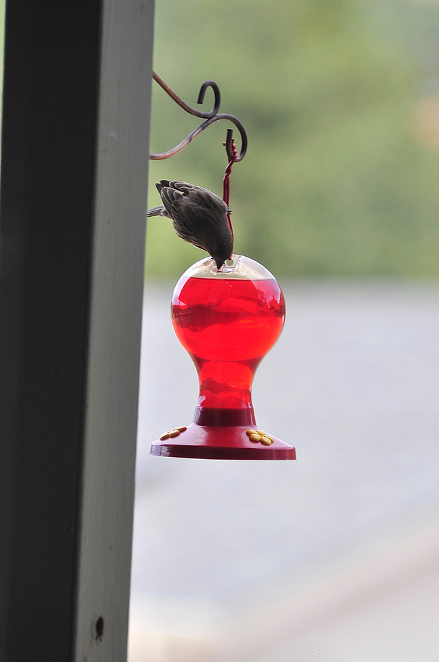 Walt Hester | Trail Gazette<br /> A bird tries to determine how to use a feeder not designed for him in Carriage Hills on Friday.