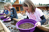 Walt Hester | Trail Gazette<br /> Katie Coquat, 9, of North Platte Nebr. pans for colorful rocks at the Rose Rock Shop on Saturday. The shop, open year-round, is offering new entertainment for younger visitors.