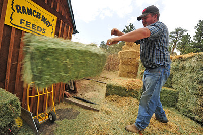 Walt Hester | Trail Gazette Hay broker Robbie Crowder from Crowder Ranch delivers hay to Estes Park Feed Supply on Wednesday. While Crowder has been able to deliver qulity hay at a reasonable price so far this year, his own water for hay has been shut off due to drought rationing.