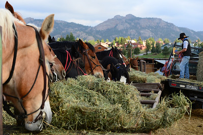 Walt Hester | Trail Gazette Horses dig into breakfast at Sombraro Ranch on Thursday. The tourist economy of Estes Park is directly effected by droughts, as they effect hay prices.