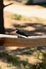 Walt Hester | Trail Gazette<br /> A small, colorful bird watches for visitors at the Estes Valley Youth Center on Wednesday. While the youth center itself is closed for the summer, the skate park is always open for business.