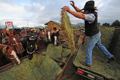 Walt Hester | Trail Gazette North Dakota native Dominic McAllister tosses hay to the horses of Sombrero Ranch on Thursday. The ranch has seen hay prices nearly doublein the last two years.