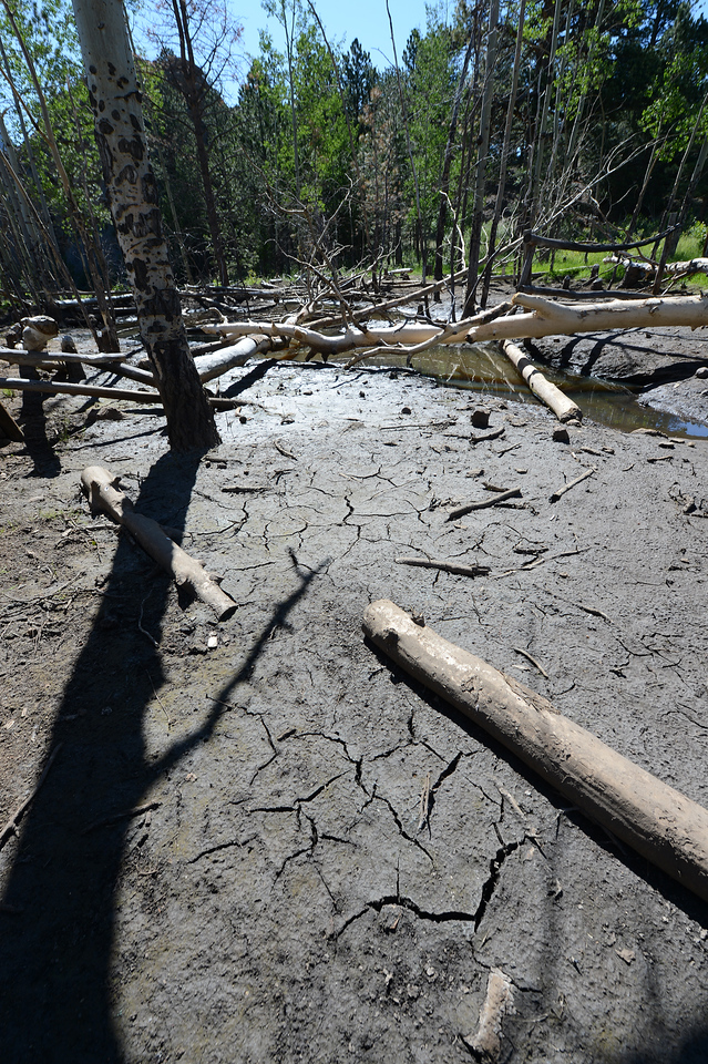 Walt Hester | Trail Gazette<br /> Cracked mud and a ribbon of water are all that remain of beaver ponds on Fish Creek on Thursday. The historic lack of moisture has dried up the once thriving stream.