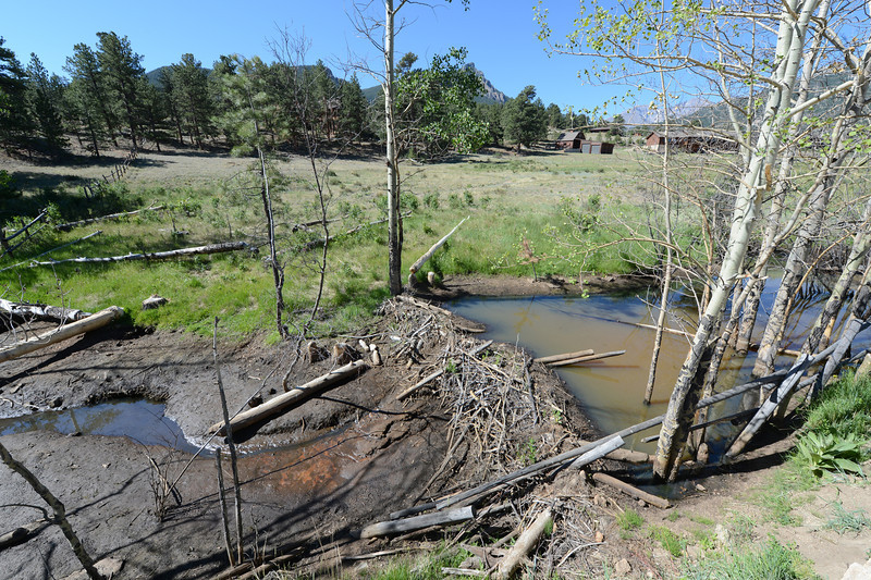 Walt Hester | Trail Gazette<br /> Stagnant water pools behind a beaver dam, while only a trickle goes down stream in Fish Creek on Thursday. Lack of rain and snow have curtailed stream flow.