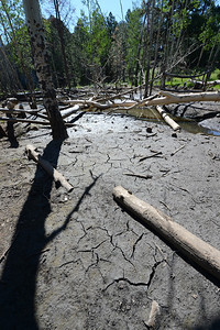 Walt Hester | Trail Gazette Cracked mud and a ribbon of water are all that remain of beaver ponds on Fish Creek on Thursday. The historic lack of moisture has dried up the once thriving stream.