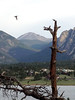 A bird takes flight from an old tree overlooking Lake Estes on Monday. Skies will be cloudy for most of the day with afternoon storms possible and a high near 82.