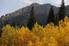 Walt Hester | Trail-Gazette<br /> A stand of aspens at the Lily Lake Visitor Center contrast against evergreens and the Twin Sisters on Wednesday. Trees are changing, but inconsistently so, as the dry spring has stressed many of the stands around the valley.