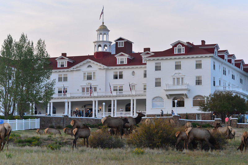 Walt Hester | Trail-Gazette<br /> An elk herd lingers in front of the famous Stanley Hotel on Wednesday. WIth plenty of open space and shrubbery, the area around the hotel is perfect fer a hungry herd.