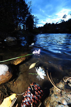 Walt Hester | Trail-Gazette<br /> Flowers representing sins and regressions, as well as hopes and wishes, drift down the Big Thompson River on Tuesday. Wednesday was the Day of Atonement on the Jewish callendar.
