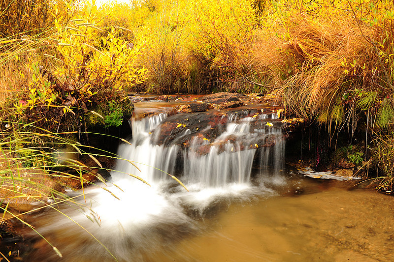 Walt Hester | Trail-Gazette<br /> Autumnal leaves add flecks of gold to a stream in Rocky Mountain National Park on Wednesday. Trees are ranging widely in their seasonal change, from green to gold and even bare, as fall sets in.