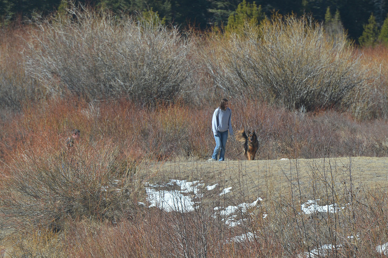 A woman walks her dog through Horse Shoe Park on Tuesday morning. It is illegal to walk dogs off of the paved roads in the national park.