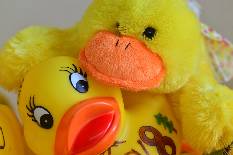 Ducks get friendly at Duck Central on Tuesday. Duck Central, the epicenter of Duck Race activity, is located in Upper Stanley Village, directly across from Safeway.