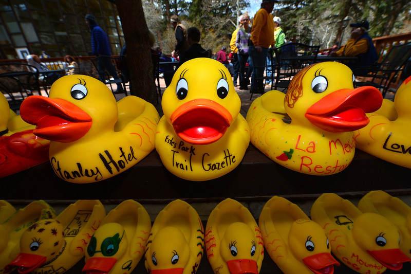 Large sponsor ducks await their turn in the water. Estesd Park's business community is a big part of the Estes Park Duck Race's success.