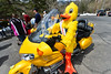 Quilton sits in style at the starting line on Saturday. The famous mascot of the duck race was all over, sometimes on foot and sometimes on wheels, promoting and encouraging last-minute entries.