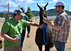 Andy Darter, right of Elizabeth, Colo., holds a 14-year-old Carlos Mystic LIghtning, while he is petted by a visitor to the June 8 and 9 Estes Park Wool Market held in The Fairgrounds at Stanley Park. Carlos, a 280 pound male, was entered in both show and pack competition.
