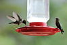 06EPStand Bird Break.jpg Walt Hester | Trail-Gazette<br /> Hummingbirds enjoy some sweet relief at the Boldpate Inn on Tuesday. The historic hotel has many feeders on its deck, to the delight of patrons.