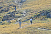 Labor Day hikers follow a trail above Old Fall River Road in Rocky Mountain National Park.
