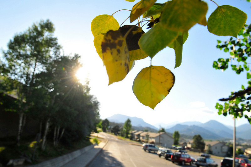 Photo by Walt Hester<br /> Aspens show fall color in the Aquatic Center parking lot on Thursday.