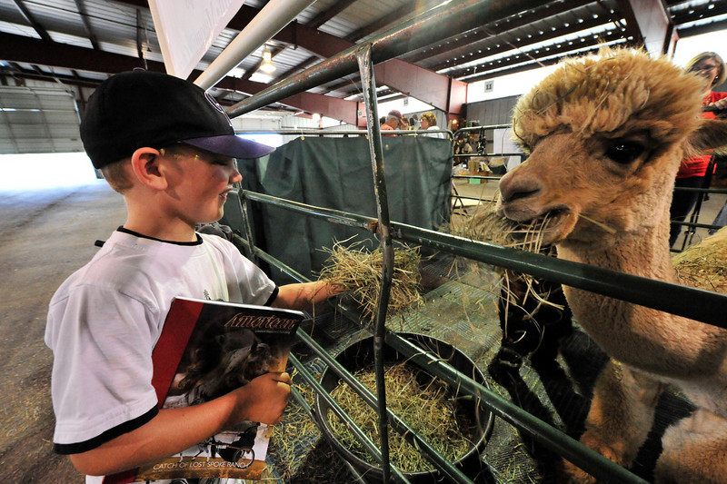 Photo by Walt Hester<br /> Cayden Shopp, 6, of Casper, Wyo. feeds an alpaca at the Alpaca Market at the Stanley Fairgrounds on Saturday. The annual event promotes the animals, their fleece and the products the fleece can be made into.