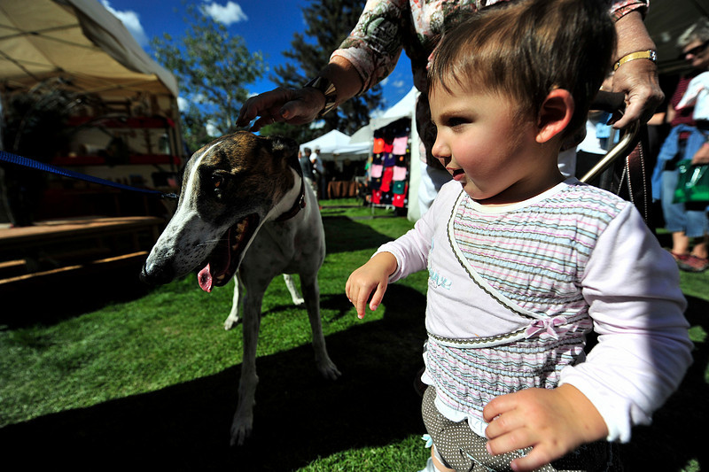 Photo by Walt Hester<br /> A young child enjoys petting a rescue greyhound at in Bond Park on Saturday.