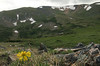 Photo by Walt Hester<br /> Flowers and snow mix above treeline near the Alpine Visitors Center on Thursday.