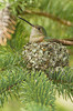 Photo by Walt Hester<br /> A hummingbird takes a short siesta in its tiny nest in Performance Park on Friday.