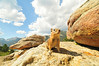 Photo by Walt Hester<br /> An overly-friendly rodent checks a visitor to Rocky Mountain National Park for food. It is illeagal to feed the animals in the park.