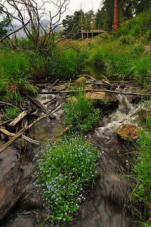 Photo by Walt Hester<br /> A small stream rolls through the Knoll/Willows area near MacGregor Avenue on Tuesday.