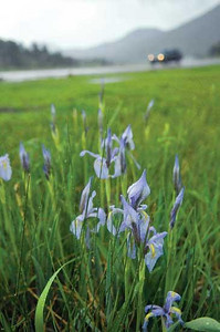 Spring showers bring... Good for flowers, Monday brought heavy rain to Estes Park. Photo by Walt Hester