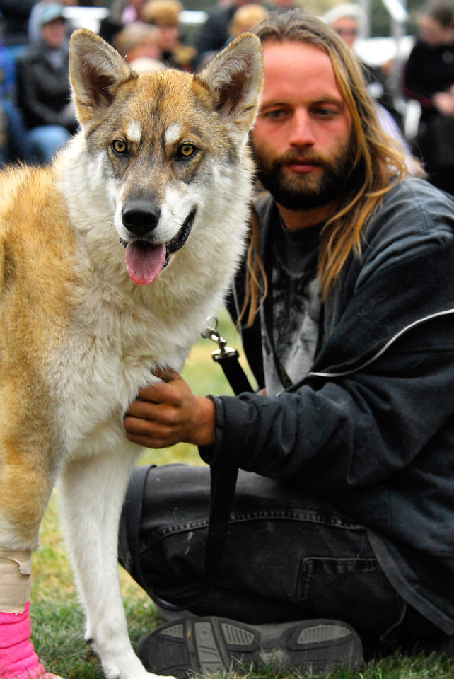 Photo by Walt Hester<br /> Joel Frizzell of the Wolfwood refuge, and Akayla, a dog-wolf mix, sit in front of the crowd at Elk Fest on Saturday. The refuge takes in wolves and dog-wolf mixes to rehabilitate and protect them, as they are often abused and sometimes mistreated when owners realize the animals are still pretty wild.