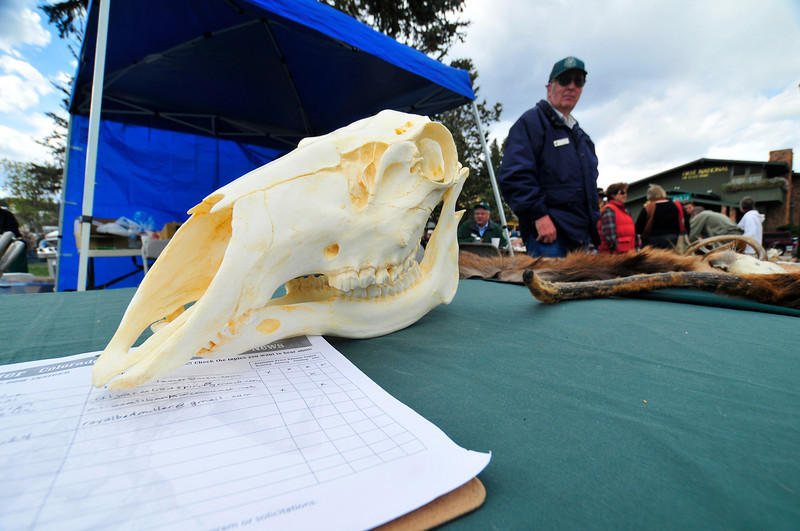 Photo by Walt Hester<br /> An elk scull adorns the Division of Wildlife table at Saturday's Elk Fest.<br /> The DOW educated visitors on the behavior and habitat, as well as helping deter poaching.